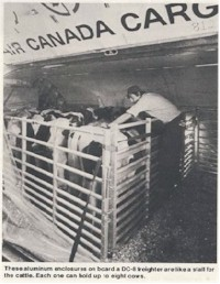 tmb cattle transport