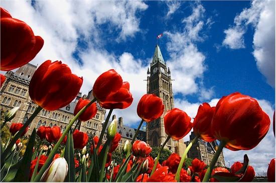tmb 550 tulip festival